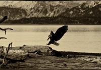 Landing Log