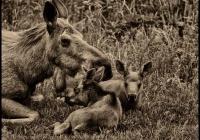 Mama & The Kids